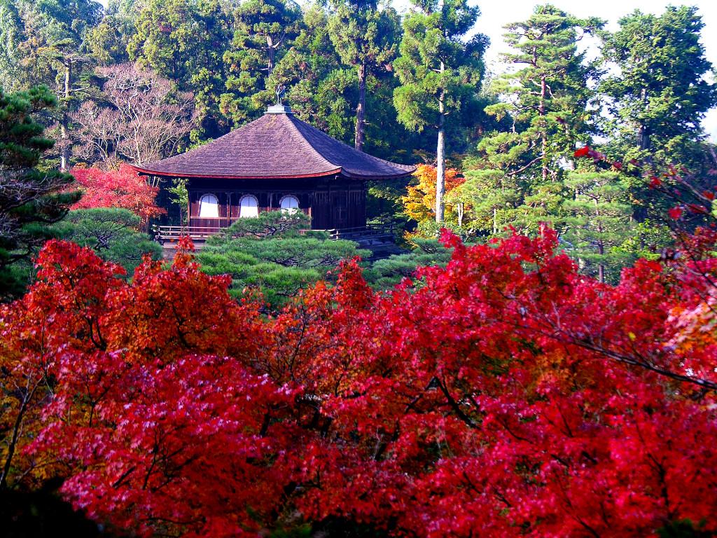 پاییز در باغ