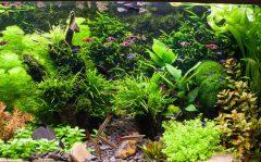 گیاهان آبزی میان آبی