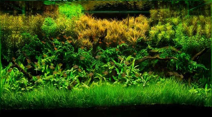 گیاهان مناسب رشد اکواریوم
