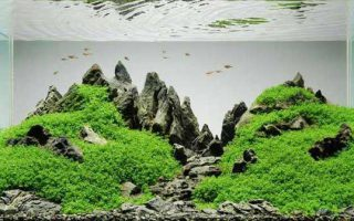 گیاهان آبزی زیر آبی
