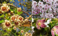 درختچه های زمستان گل