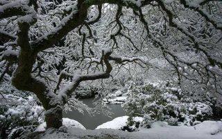 درختان مقاوم به سرما