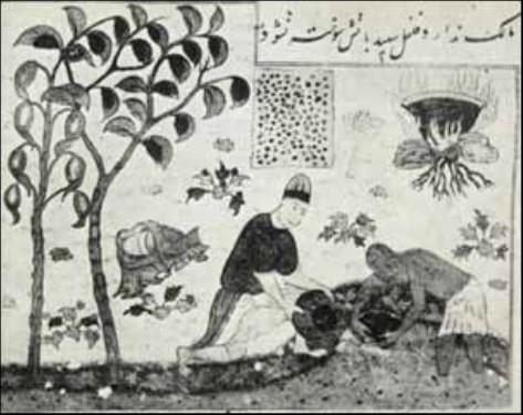 مینیاتور سبک تبریزمربوط به سده هشتم ق با موضوع کاشت درخت فلفل سفید