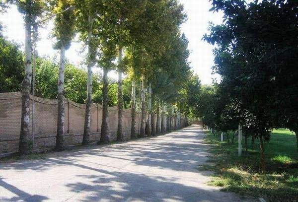 مسیر درخت کاری شده