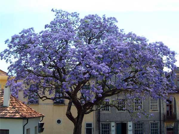 درخت نوروز در ایام نوروز