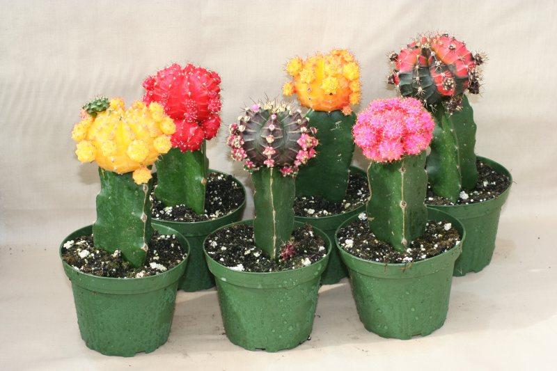 عکس گل گلدان