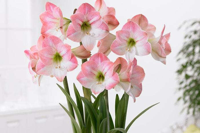 نتیجه تصویری برای گل