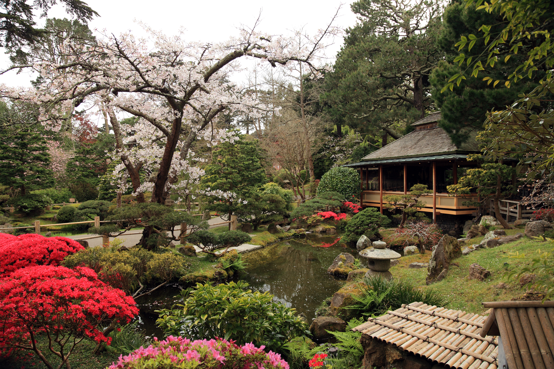 باغ چای ژاپنی