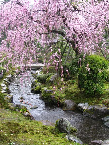 باغ در بهار