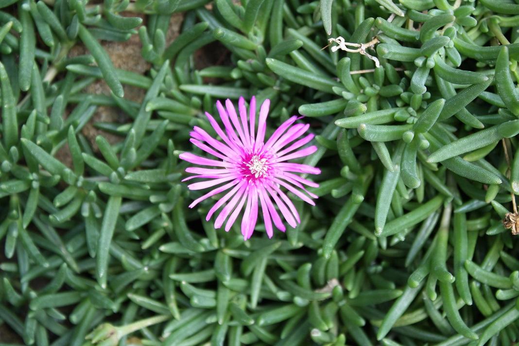 گل ناز گوشتی