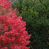 درختچه های بهار گل