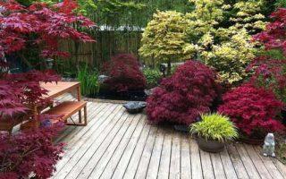 درختان با رنگ متفاوت در باغ