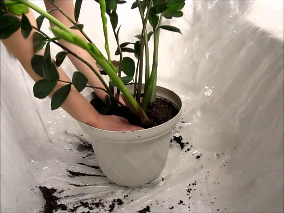 تعویض گلدان