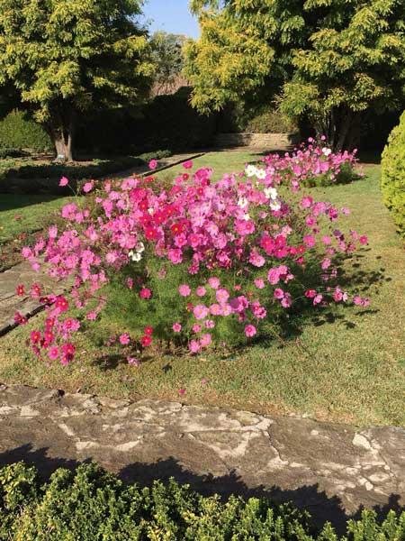 گل فصلی
