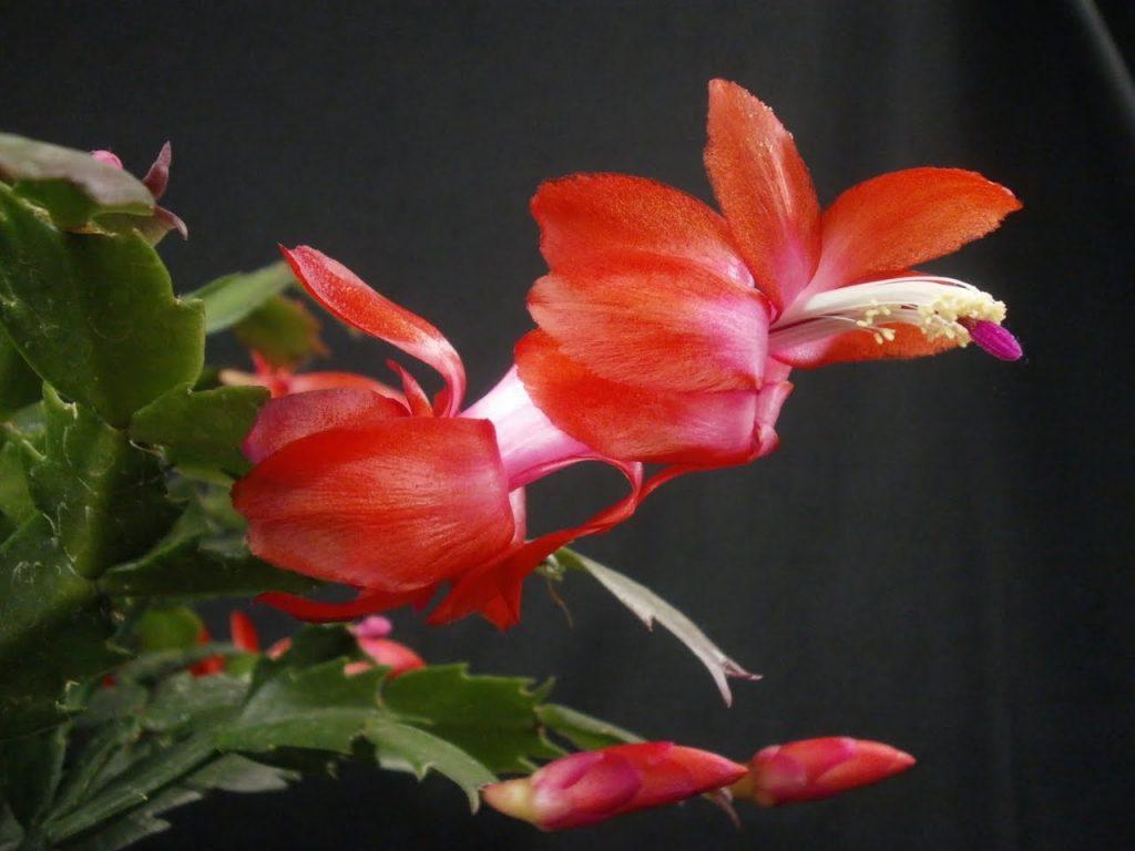 گل از نمای نزدیک